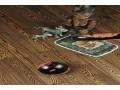 澳品地板—实木仿古白腊木-AL-013